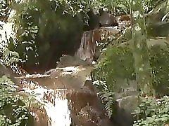 Bombshell Shemale And Tarzan In The Jungle Gentlemens Video